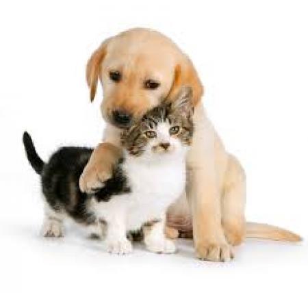 Zbiórka na rzecz schroniska dla zwierząt