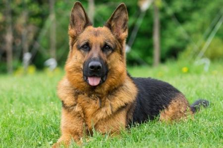 Pies najlepszy przyjaciel człowieka